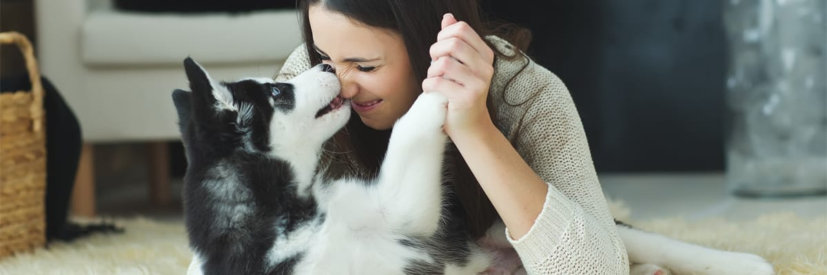 Razones por las que amamos a los perros
