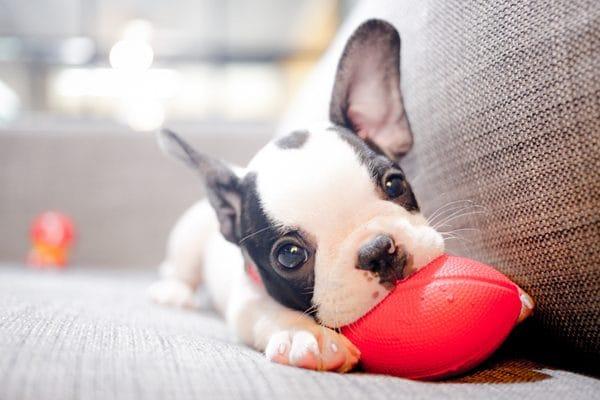 Qué juguete comprarle a mi perro