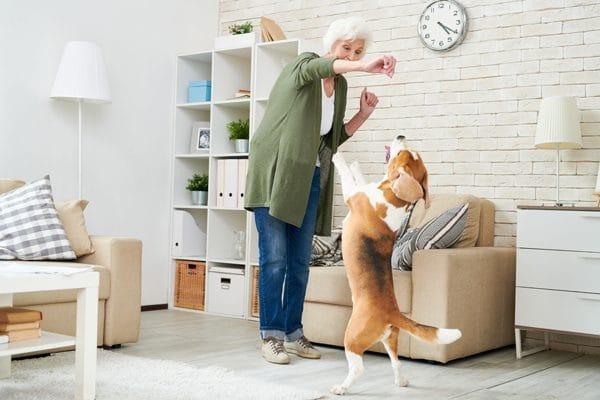 tips de adiestramiento canino