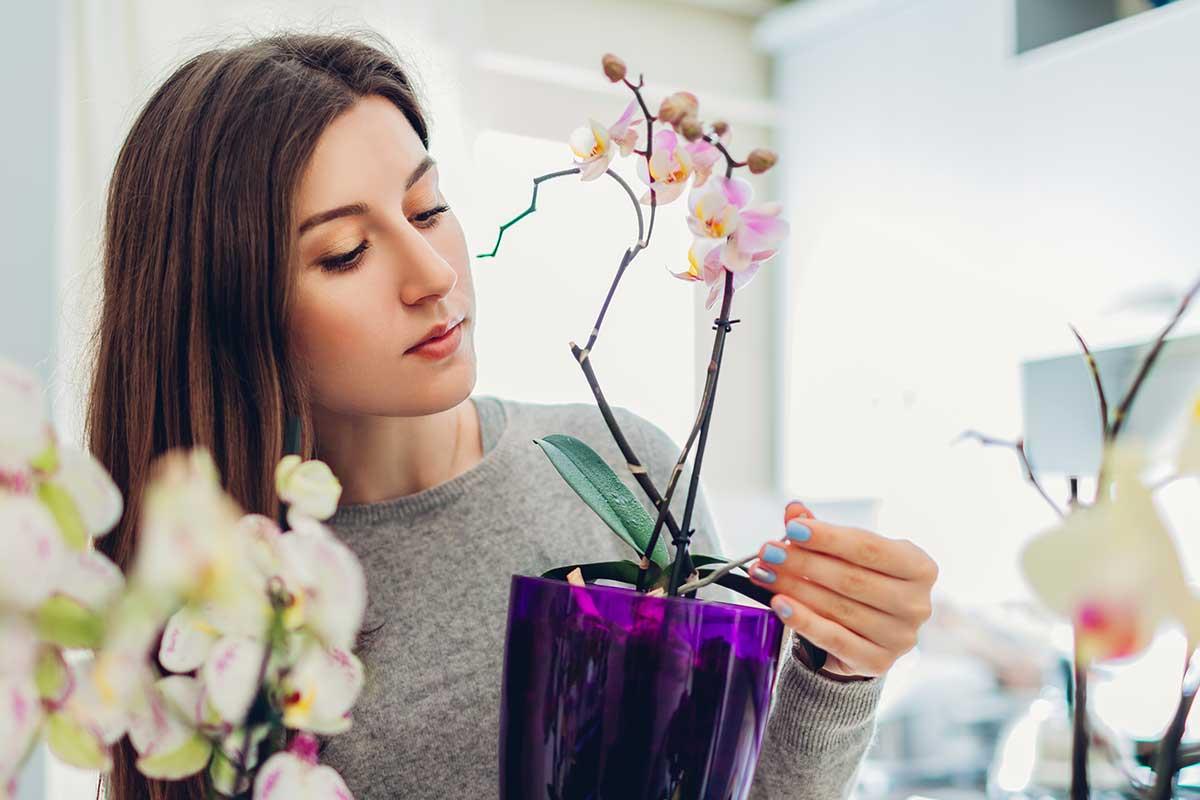 Coloca tu orquídea vanda en un lugar con mucha luz natural