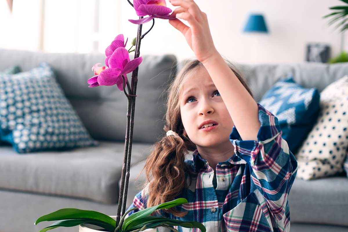 Después de un par de meses, tu orquídea vanda estará lista para volver a florecer