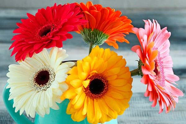 Las flores ideales para mamá, según su significado - Gerberas