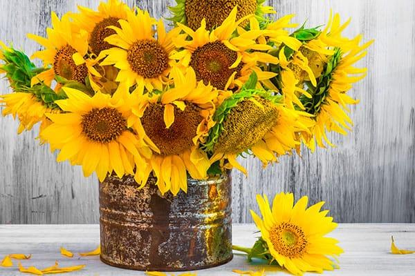 Las flores ideales para mamá, según su significado - Girasoles