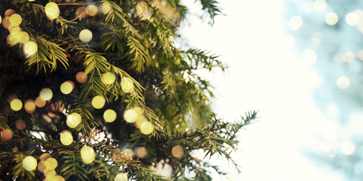 beneficios de un arbol de navidad natural