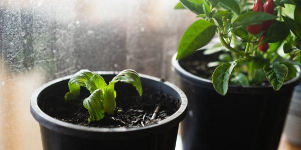 cómo sembrar verduras en casa