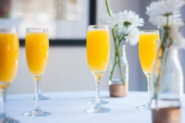 mimosa-clasica